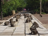 Saigon Can Gio 1 Day Tour | Can gio Mangrove Forest Tour - Monkey Island