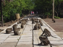 Saigon - Can Gio 1 Day Tour - Monkey Island