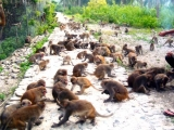 Nha Trang Monkey Island Tour 1 Day | Viet Fun Travel