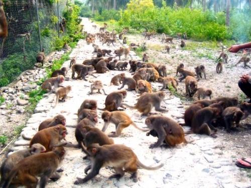 Kết quả hình ảnh cho monkey island nha trang