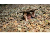 City - Cu Chi Tunnels - Cai Be Floating Market - Water Puppet Show Tour 4-Day 3-Night From Sai Gon | Viet Fun Travel