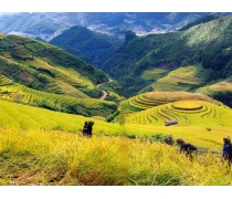 Sapa - Bac Ha Market Tour 1 Day