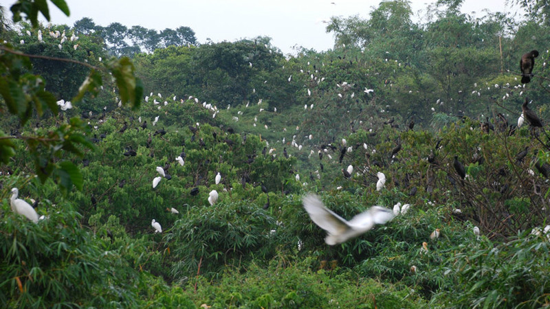 a bird garden in mekong delta