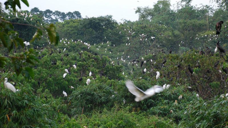 Arrive at Bang Lang Stork Sanctuary mekong delta