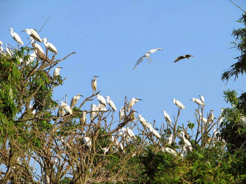 Bird Parks In Ca Mau – Best Places for Birdwatching