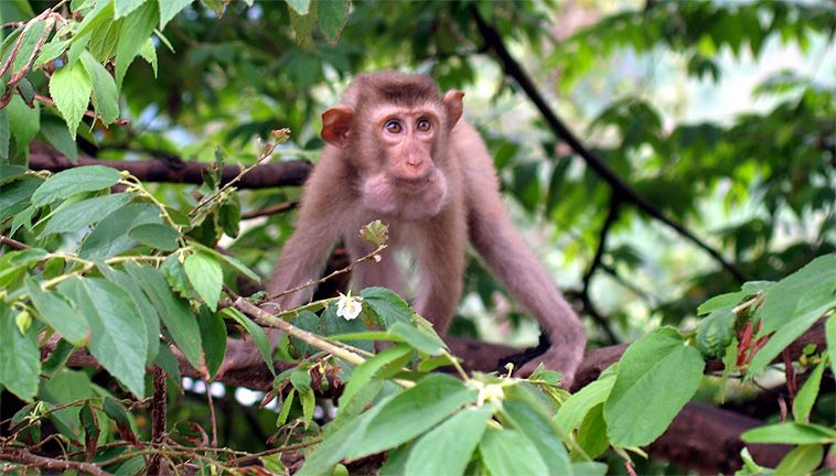 Enjoy wild animal Phu Quoc natinal park