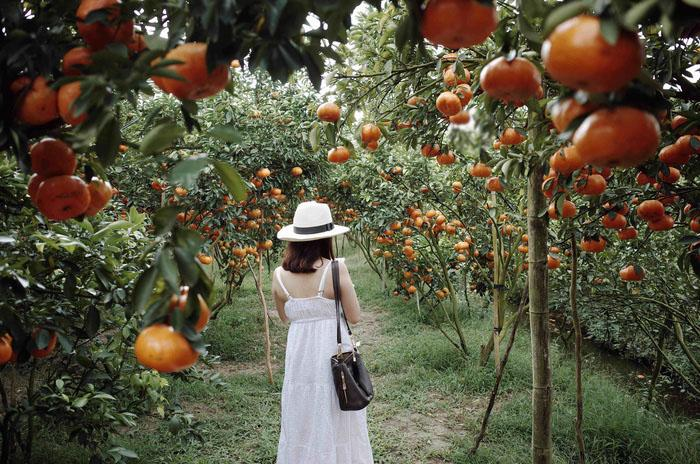 Traveler visit a fruit garden